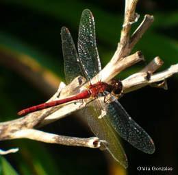 Balade - Entomologiste d'un jour