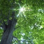 Balade: «Ces arbres qui nous font du bien»