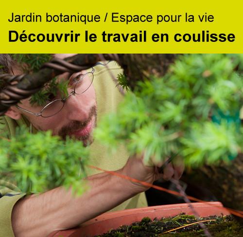 Jardin botanique: découvrir le travail en coulisse
